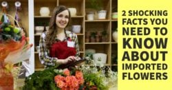 2 SHOCKING FACTS YOU NEED TO KNOW ABOUT IMPORTED FLOWERS